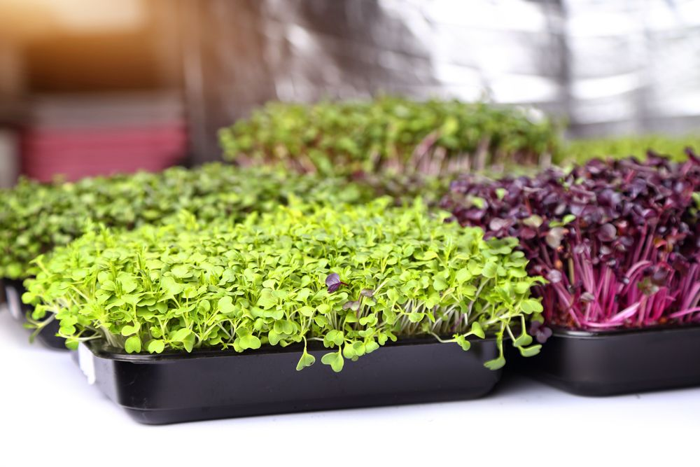 diy ideas for the home-microgreens-plastic containers