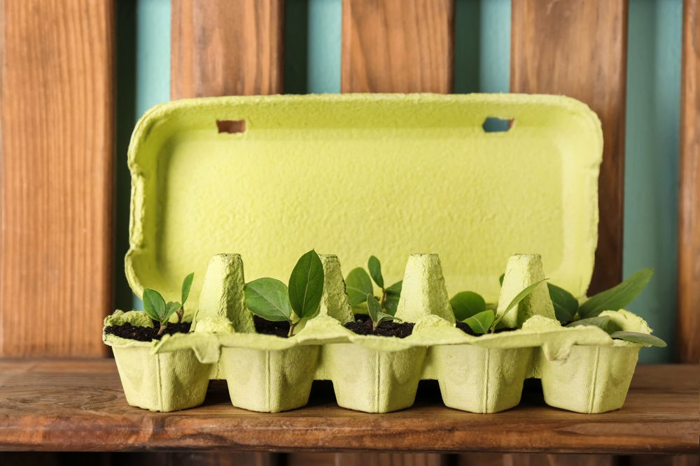 diy plant pots-egg carton