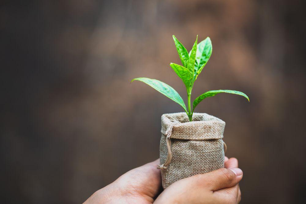 diy plant pots-gunny bag