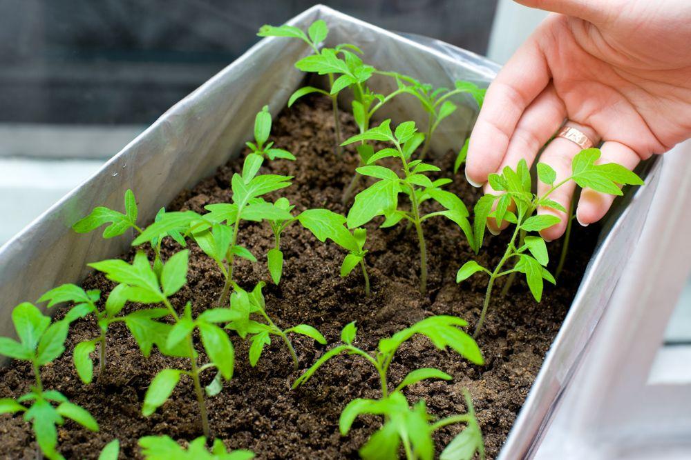 diy plant pots-cardboard box