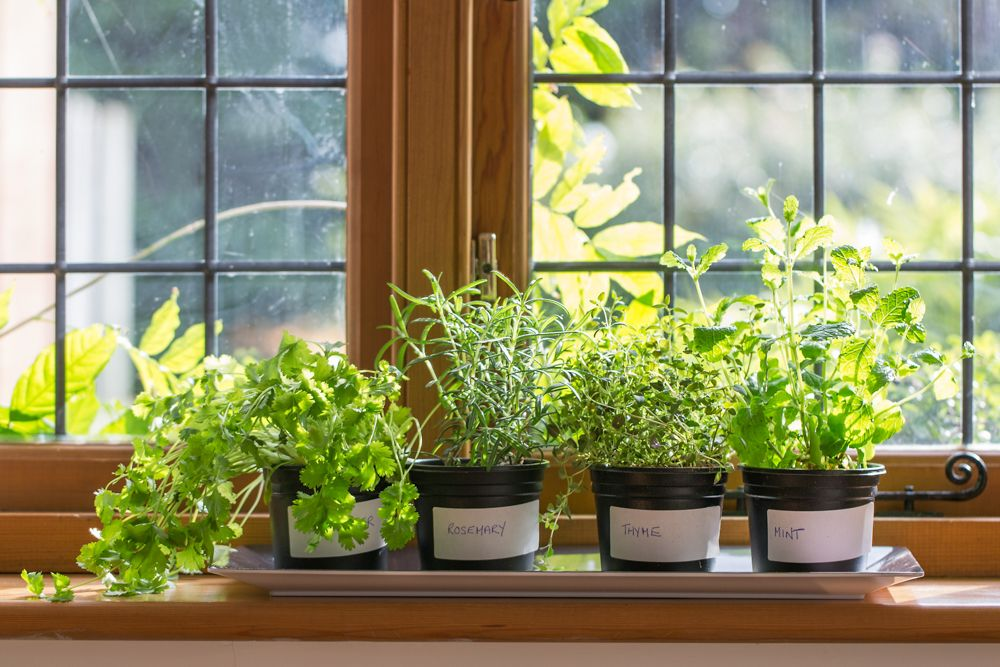 kitchen herbs-plants
