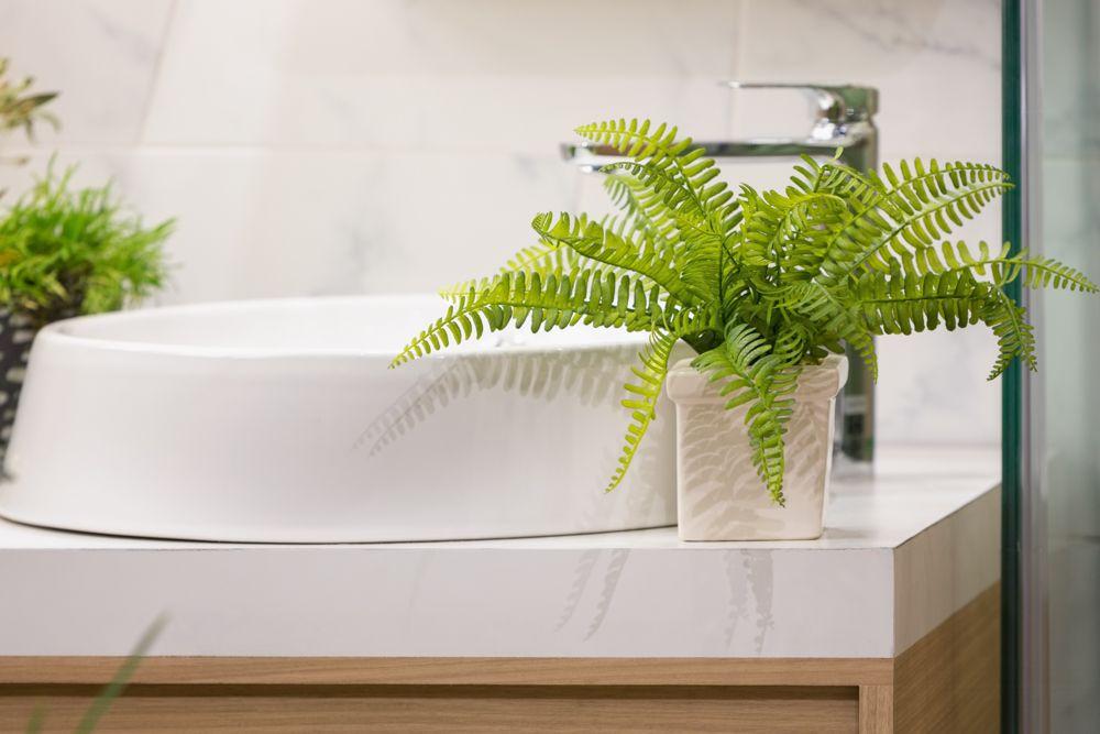 indoor plants india-ferns-bathroom