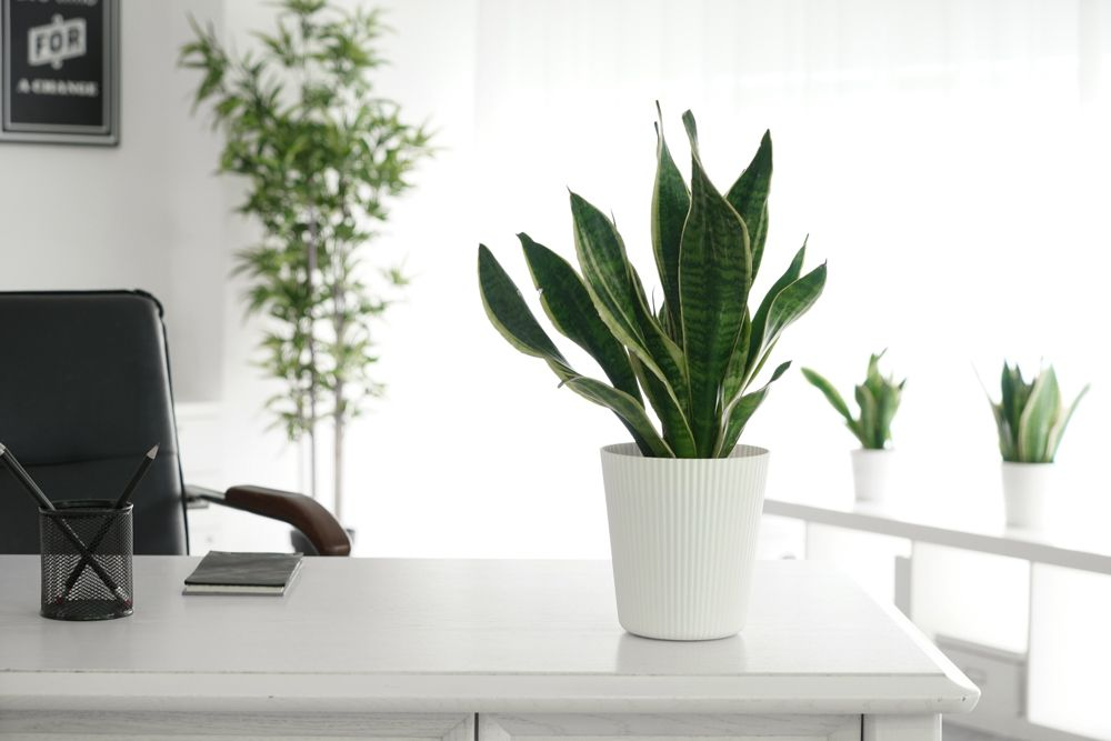 watering indoor plants-how much to water
