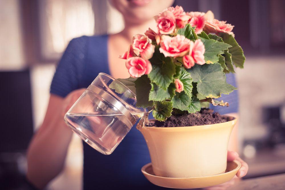 watering indoor plants-water soil