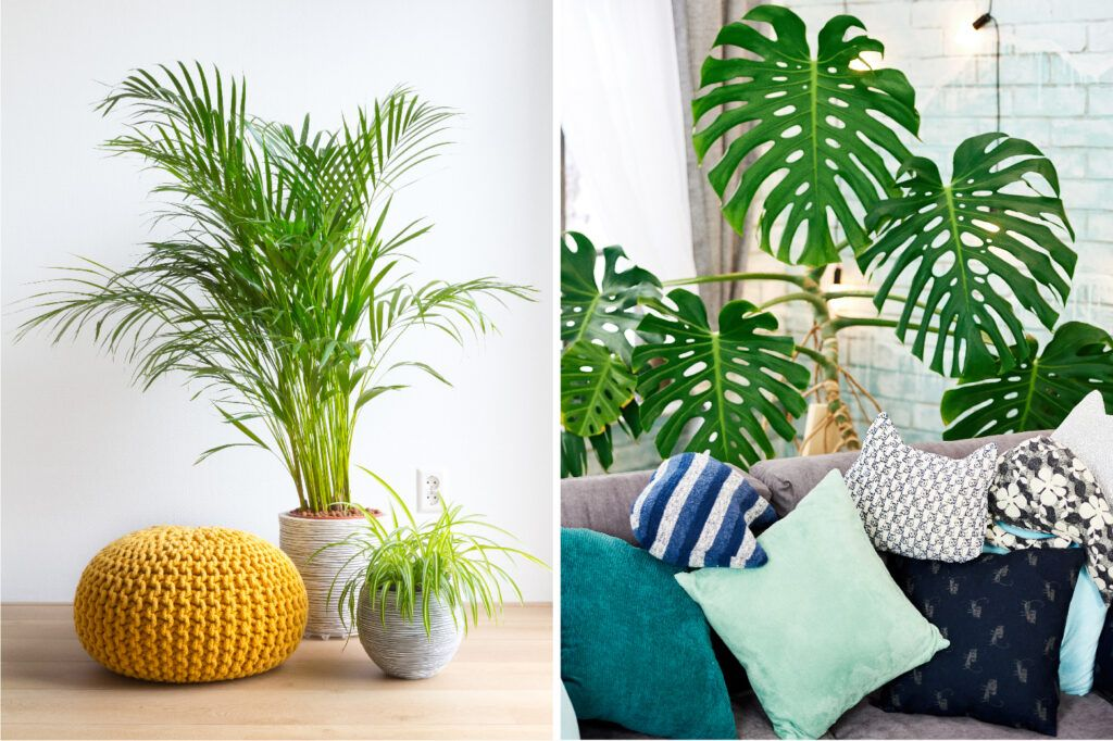 decorating-with-plants-palm-monstera-plant