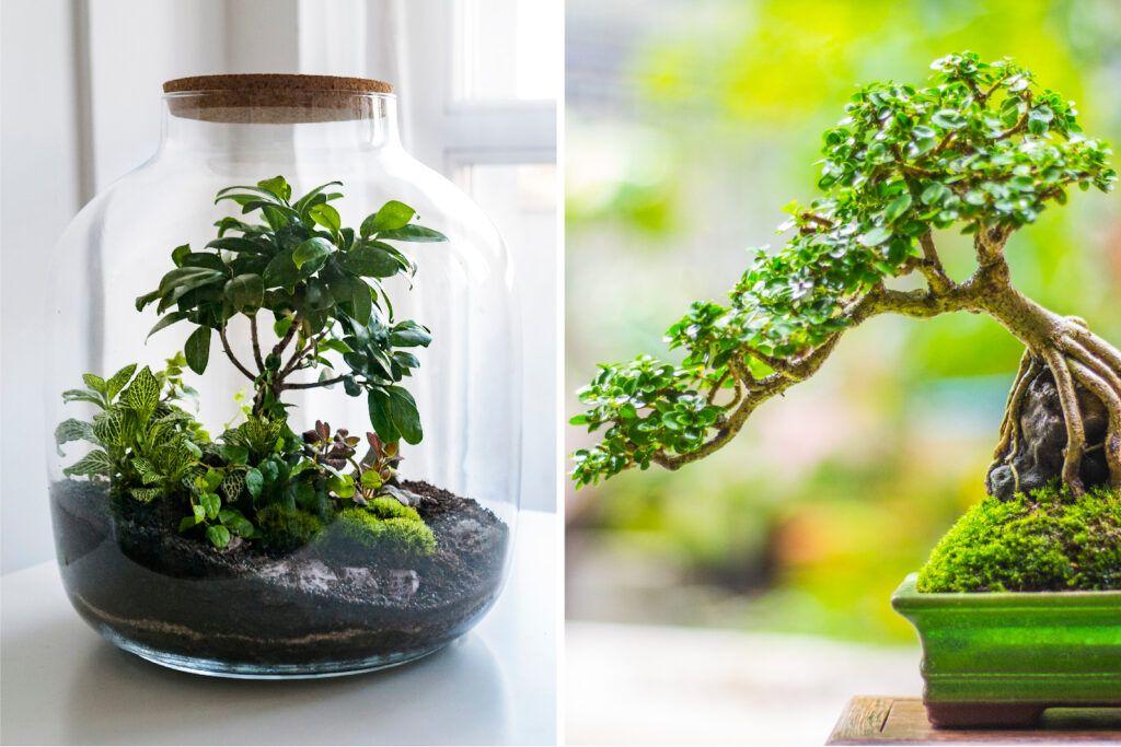 terrariums-and-bonsai