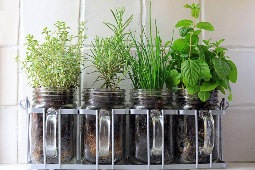kitchen garden-kitchen herbs