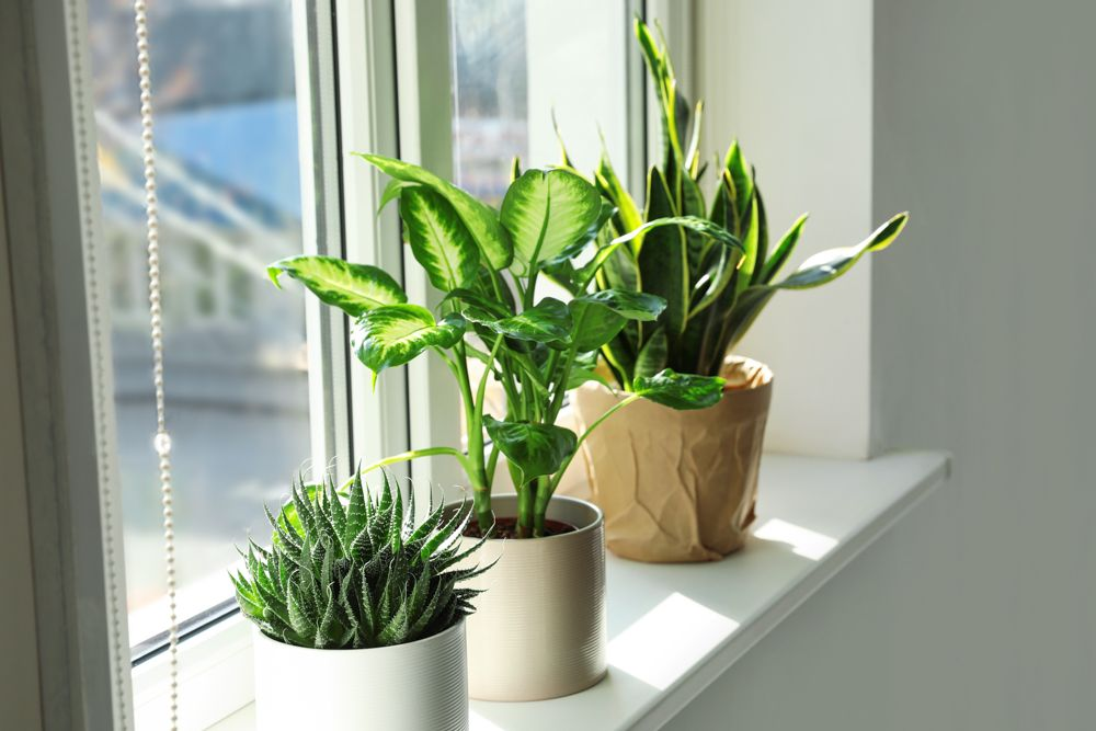 small bedroom design-potted plants