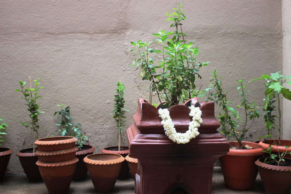 indian interior design - sacred plant