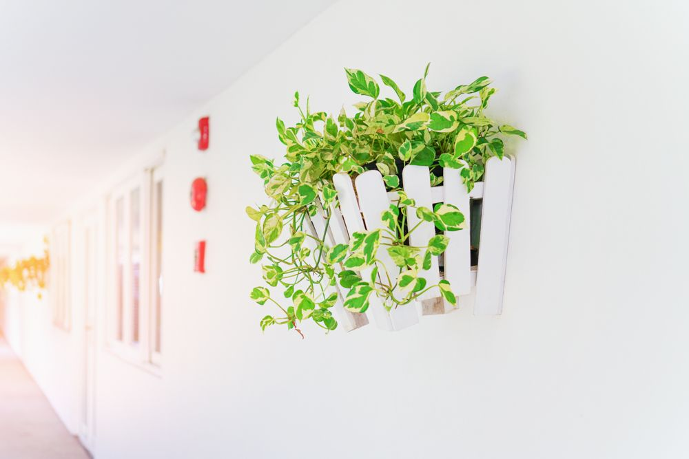 money plant vastu-north entrance