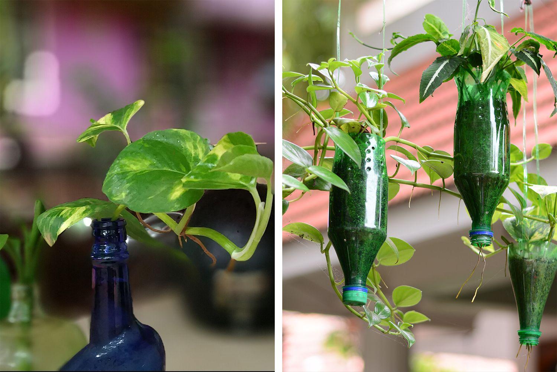 money plant vastu - blue and green