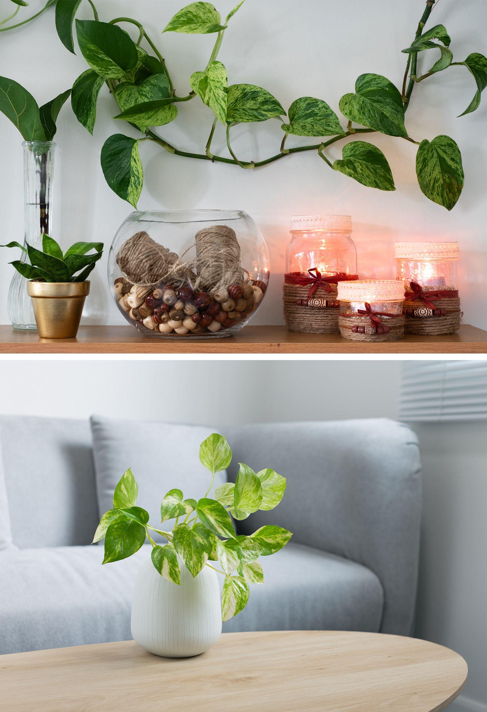 money plant vastu - indoor plant
