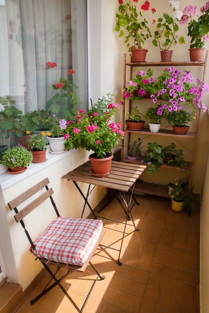 how to take care of plants in summer-
