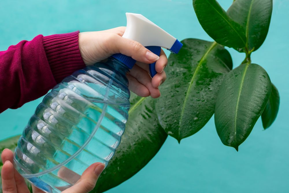 summer care for plants-spray water on plants