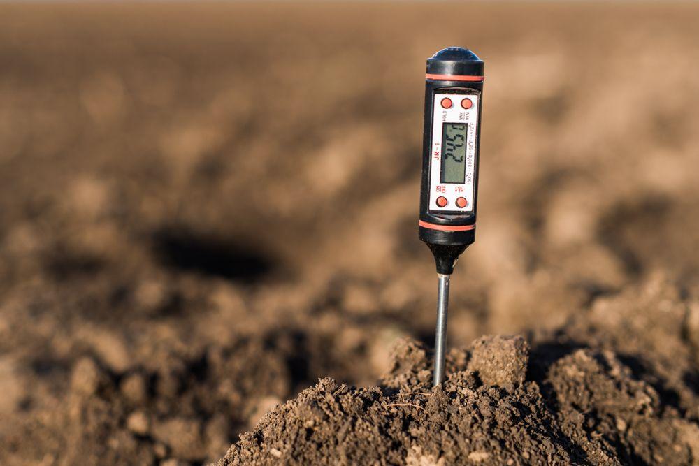 summer care for plants-retain soil moisture