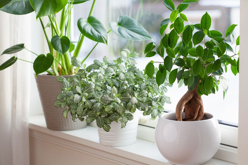 houseplants-potted plants