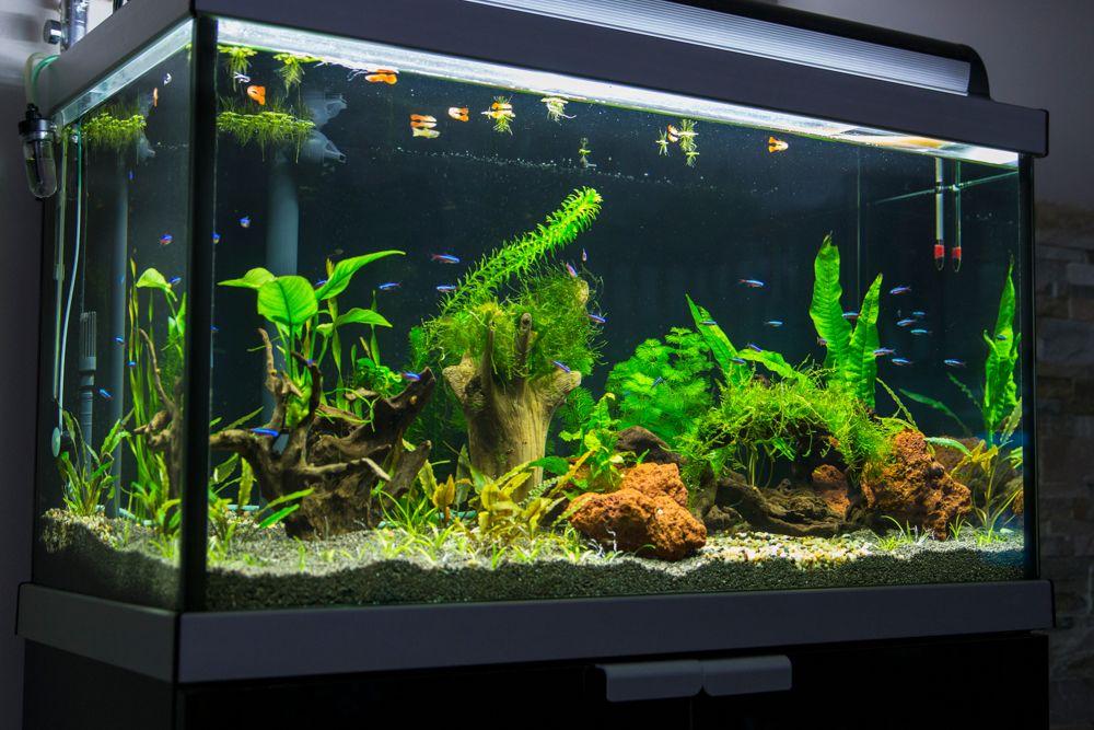 vastu tips-aquarium