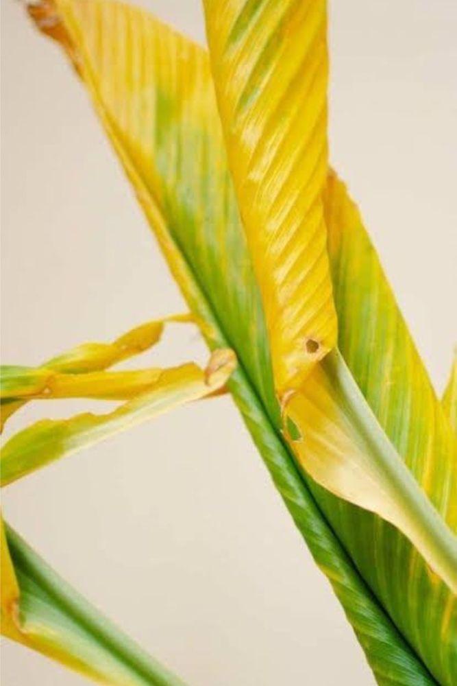 plant diseases-pest attack