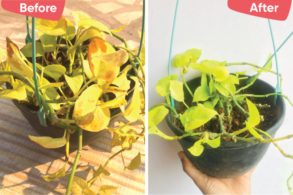 plant problems-spider mite