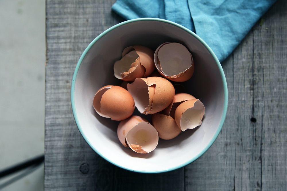 how-to-get-rid-of-lizards -eggshells