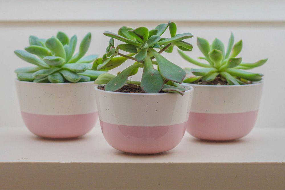 succulent-plant-pink-pots-watering