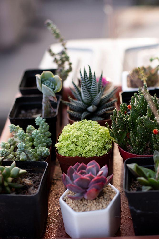 succulent-plant-planters-soil
