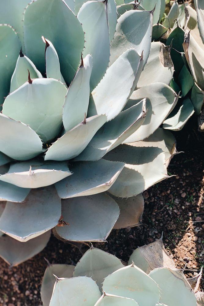 succulent-plant-weather-sunny